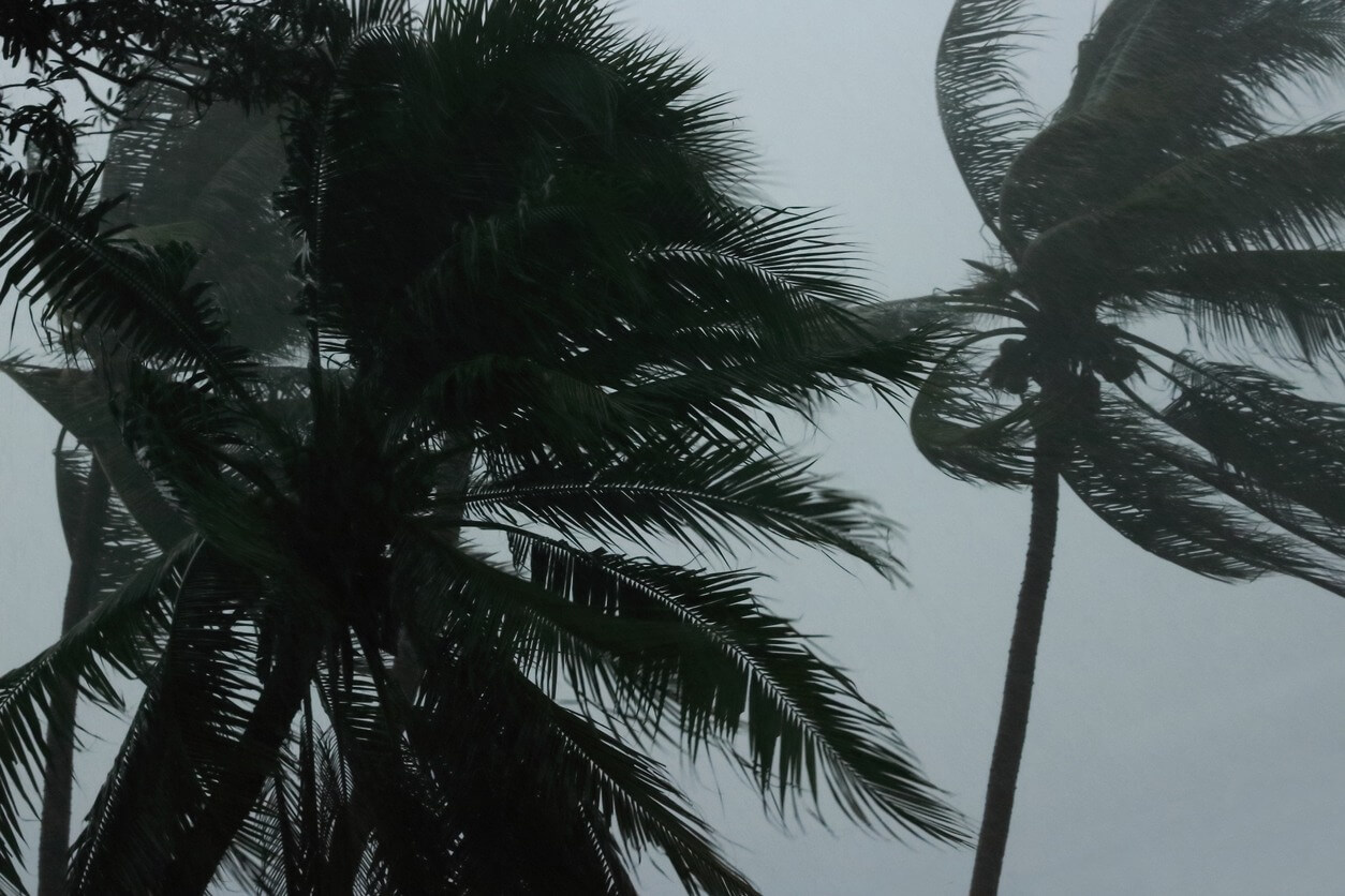 palms tree during heavy wind
