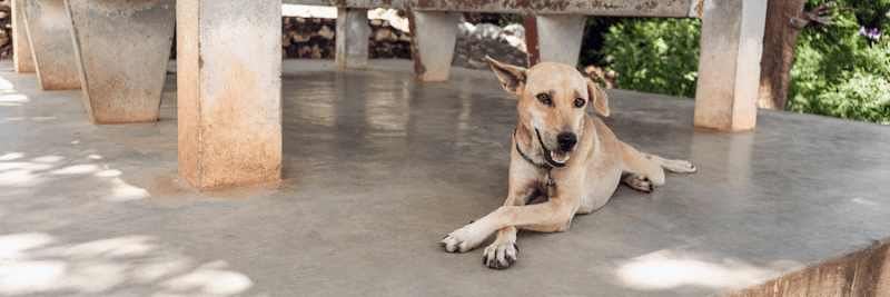 dog resting on concrete underneath shade