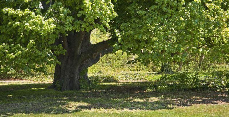 tree casting sharp shadows